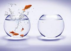 """Fishbowl Jump"". Kay Kim. Licencia CC BY 2.0"
